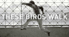 TheseBirdsWalk