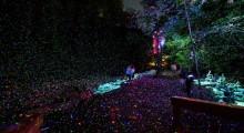 Forest Lumina